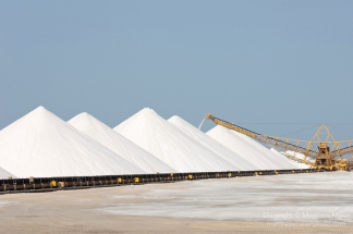 bonaire-sea-salt-plant-photo-014351
